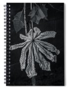 Dry Leaf Collection Bnw 2 Spiral Notebook