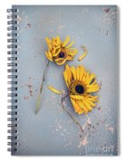 Dry Sunflowers On Blue Spiral Notebook