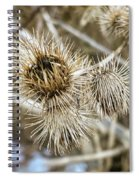 Dry Thistle Buds Spiral Notebook