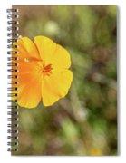 Dsc_1515 Web Spiral Notebook