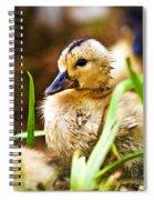 Duckling Spiral Notebook