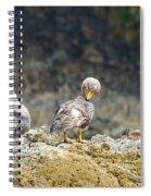 Ducks On A Rock Spiral Notebook