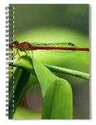 Duckweed Firetail Damselfly Spiral Notebook