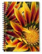 Dueling Gerberas Spiral Notebook