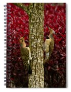 Dueling Woodpeckers Spiral Notebook