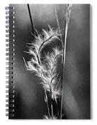 Dune Grass - Paint Bw Spiral Notebook