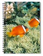 Dusky Clownfish Spiral Notebook