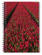 Dutch Tulips Second Shoot Of 2015 Part 1 Spiral Notebook