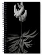 Dutchman's Breeches Black And White Spiral Notebook