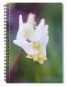Dutchman's Breeches 2 Spiral Notebook