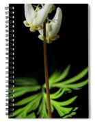 Dutchman's Breeches Narrow Format Spiral Notebook