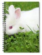 Dwarf White Bunny Spring Scene Spiral Notebook