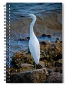 Eager Egret Spiral Notebook