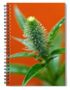 Eager For Orange Spiral Notebook