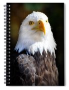 Eagle 14 Spiral Notebook