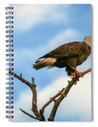 Eagle And Blue Sky Spiral Notebook