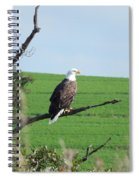 Bald Eagle Overlook Spiral Notebook