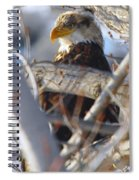Eagle In A Tree Spiral Notebook