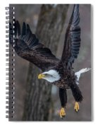 Eagle In The Forest Spiral Notebook