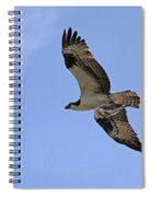 Eagle Lakes Park - Osprey In Flight With Sea Fish Meal Spiral Notebook