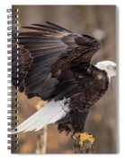 Eagle Landing On Perch Spiral Notebook