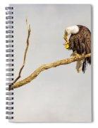 Eagle Nail Biting  Spiral Notebook