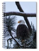 Eagle On A Frosted Limb Spiral Notebook