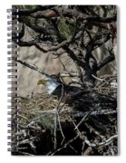Eagle On The Nest, No. 3 Spiral Notebook