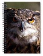 Eagle Owl 3 Spiral Notebook
