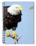 Eagle Reflection Spiral Notebook