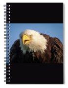 Eagle Stare 2 Spiral Notebook
