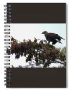 Eaglet In Pines Spiral Notebook