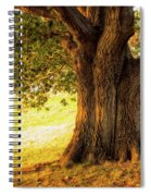 Early Autumn Oak Spiral Notebook