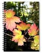 Early Days Of Autumn Spiral Notebook