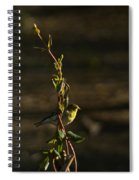 Early Morning For American Golden Finch Spiral Notebook