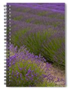 Early Morning Lavender Spiral Notebook
