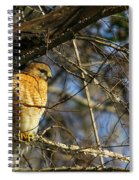 Early Morning Still Hunting  Coopers Hawk Art Spiral Notebook