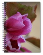 Early Openings Spiral Notebook