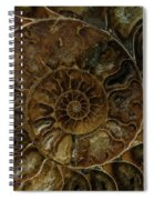 Earth Treasures - Brown Amonite Spiral Notebook