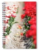 East And West A Dutch Tulip Story Spiral Notebook