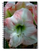 Easter Amaryllis Spiral Notebook