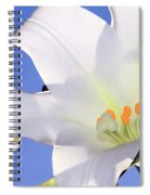 Easter Lily Back Lit By The Sun  Spiral Notebook