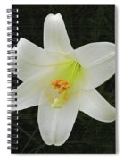Easter Lily With Black Background Spiral Notebook