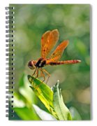 Eastern Amber Wing Dragonfly Spiral Notebook