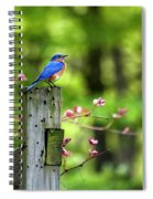 Eastern Bluebird Spiral Notebook