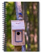 Eastern Bluebird Perched On Birdhouse 4 Spiral Notebook
