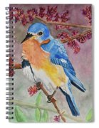 Eastern Bluebird Vertical  Spiral Notebook