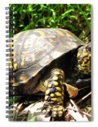 Eastern Box Turtle Spiral Notebook