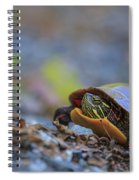 Eastern Painted Turtle Chrysemys Picta Spiral Notebook