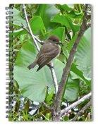Eastern Phoebe - Sayornis Phoebe  Spiral Notebook